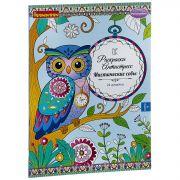 Книга раскрасок антистресс BONDIBON, Мистические совы, 24 дизайна, размер 28,5x21 см, арт. CPA3203V